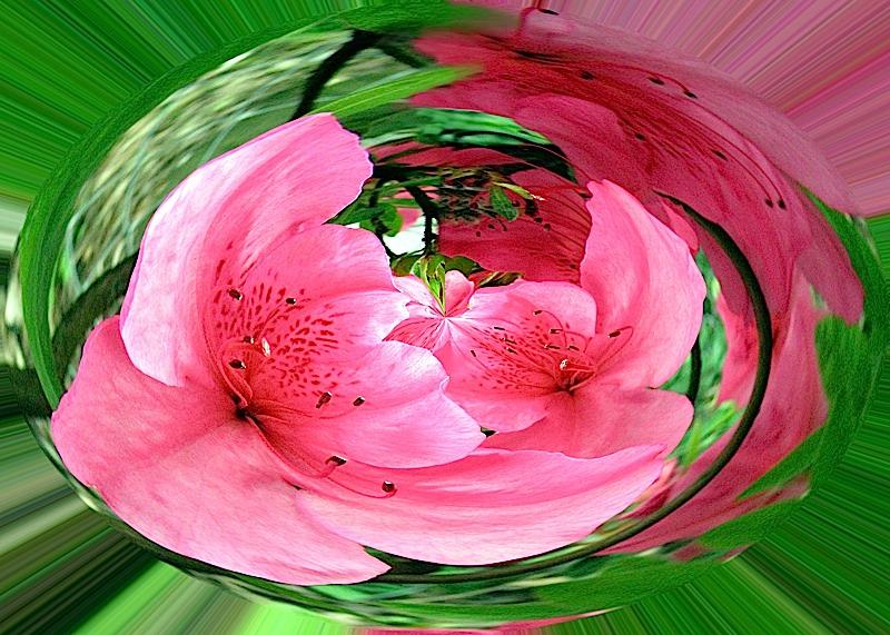 pink-flower-orb-copy