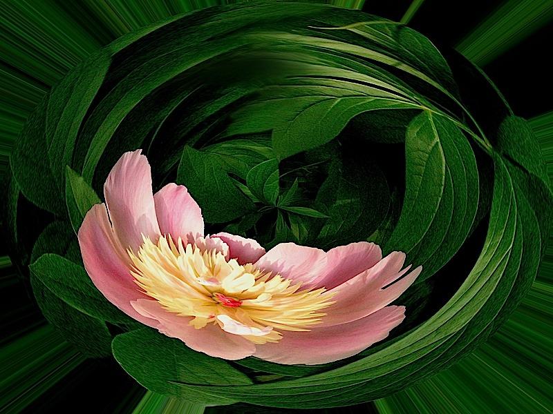 pinkflowerorb