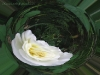 white-rose-orb_