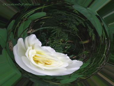 white-rose-orb_